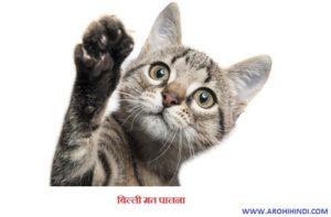 An Inspiring Story 'Billi mat Palana'/ बिल्ली मत पालना
